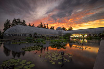 Fiery Sunset at the NY Botanical Gardens