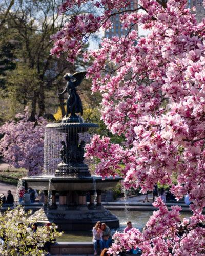 Spring Bloom Central Park
